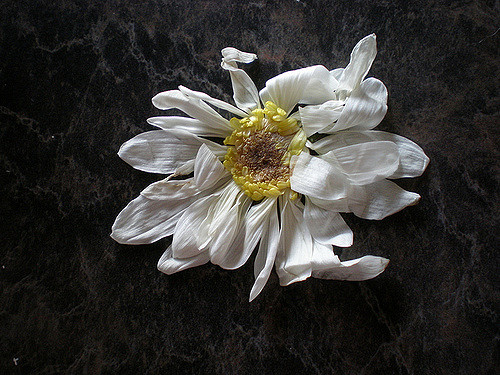 crumpledflower